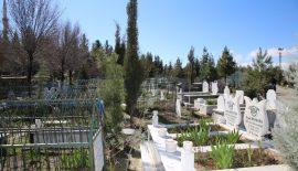Mezarlıklara Dikilmek Üzere Fidan Bırakılacak