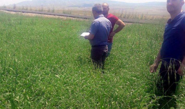 Siirt'te Sertifikalı Tohum Üretimi Artıyor