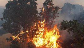 İki Günden Beri Baykan İlçesi Çamtaşı Köyü Ormanlık Alanında Yangın