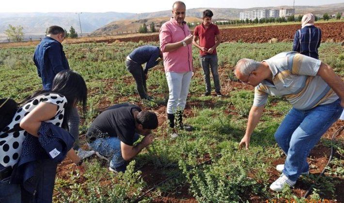 Tıbbi ve Aromatik Bitkilerin İlimizde Yaygınlaştırılması Projesi kapsamında Eğitimlere Devam Ediliyor