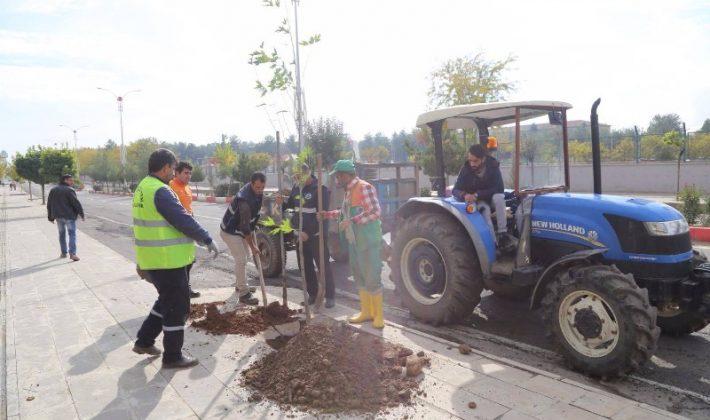 Siirt'te Ağaç Dikme Çalışması Başlatıldı