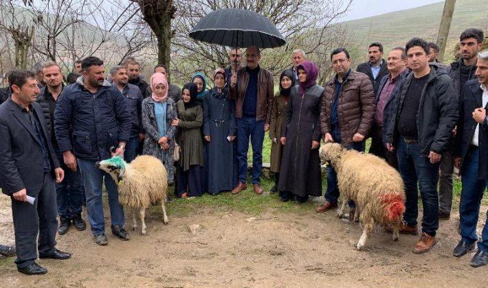 Genç Çiftçi Hibe Programı Kapsamında Kurtalan Genç Çiftçilerine Küçükbaş (Koyun/Koç) Hayvan Dağıtımı Yapıldı.