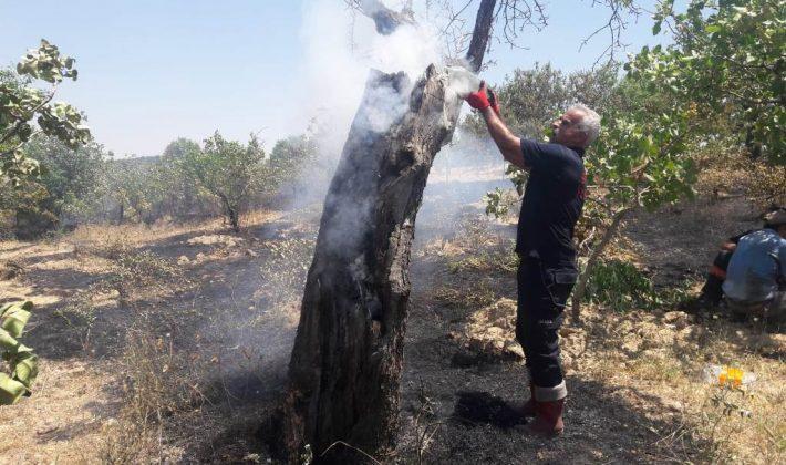 Siirt'te 4 Bağda Çıkan Yangında 200 Dönüm Alan Zarar Gördü
