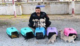 Terörle Mücadelede Kangal Köpekleri Görev Alacak